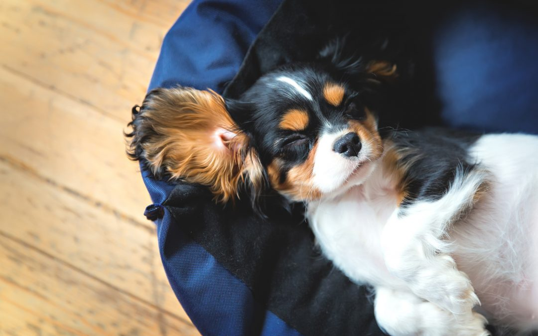 How to Clean Your Home With a Dog: Fur-Proof Cleaning Tips